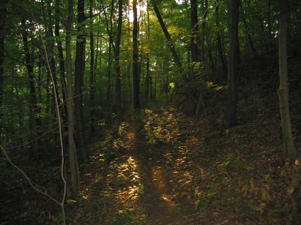 Morning sun streams through the trees