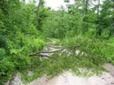 Lots of fallen trees down to Donnellville Road