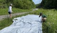 Pollinator Project  Leverages Plastic
