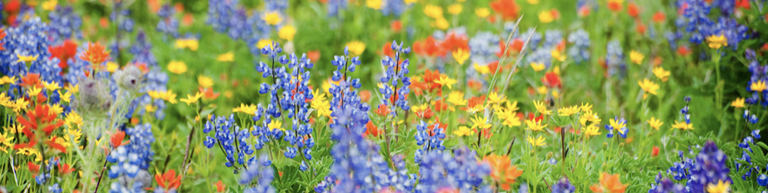 Wild flowers .png